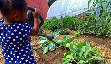 callaloo featured image-Paige waters plants
